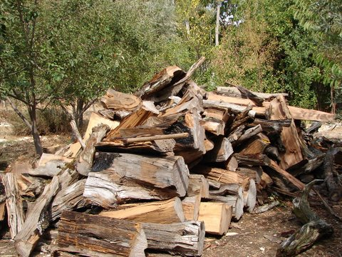 logs ready for chopping