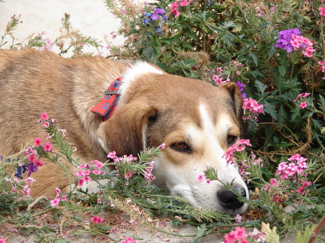 Max snoozes in the flowers