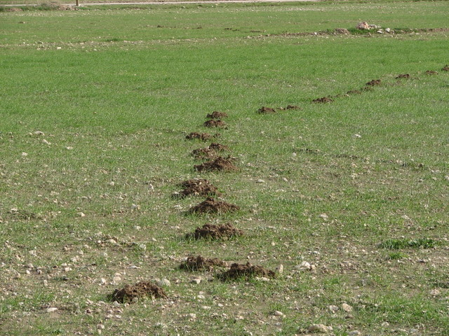molehills in field