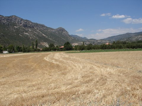 farming in Turkey - stubble field after the harvest