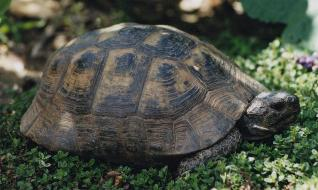 wildlife of Turkey - tortoise