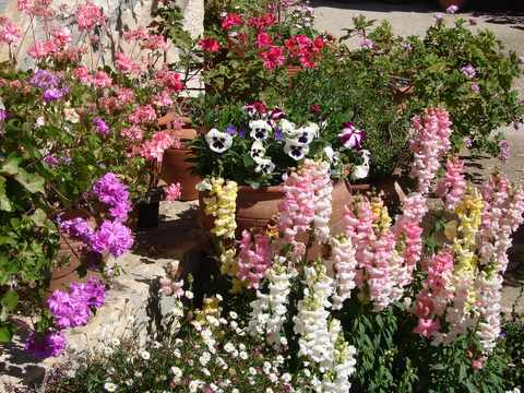 tubs and urns of flowers